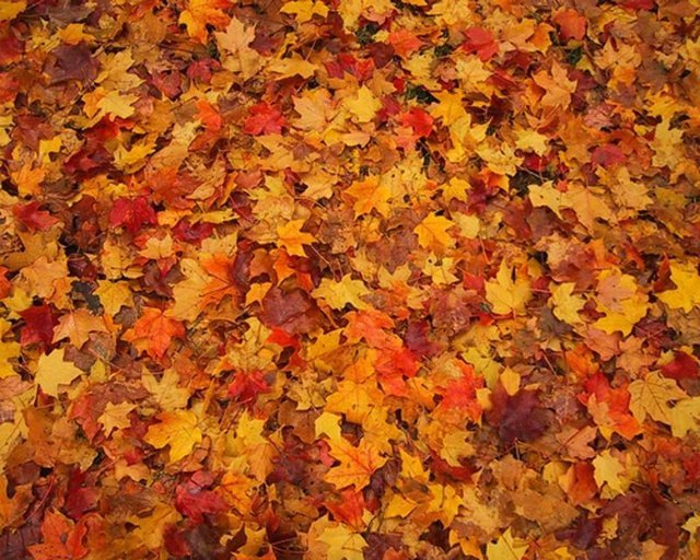 Here Are Some Quick Suggestions For Using Fall Leaves That Are Good For The  Environment, Plus Save You Time And Money Please Share With Us Any ...