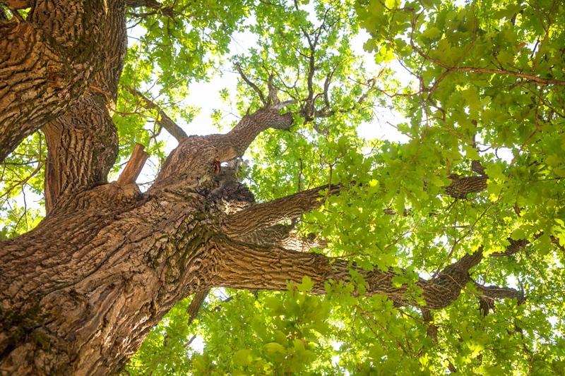 Bloomingdale Native Tree & Shrub Sale