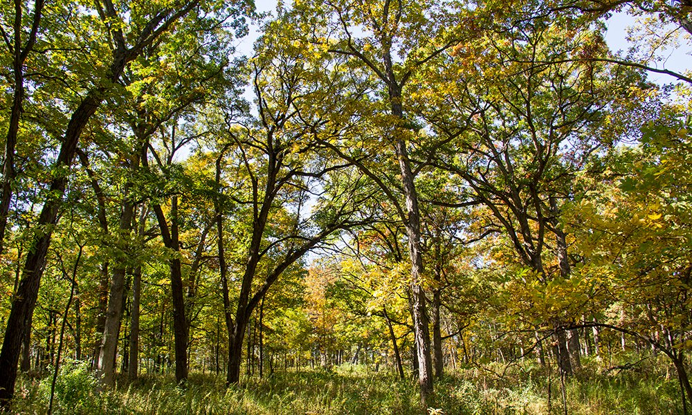 Greene Valley Forest Preserve