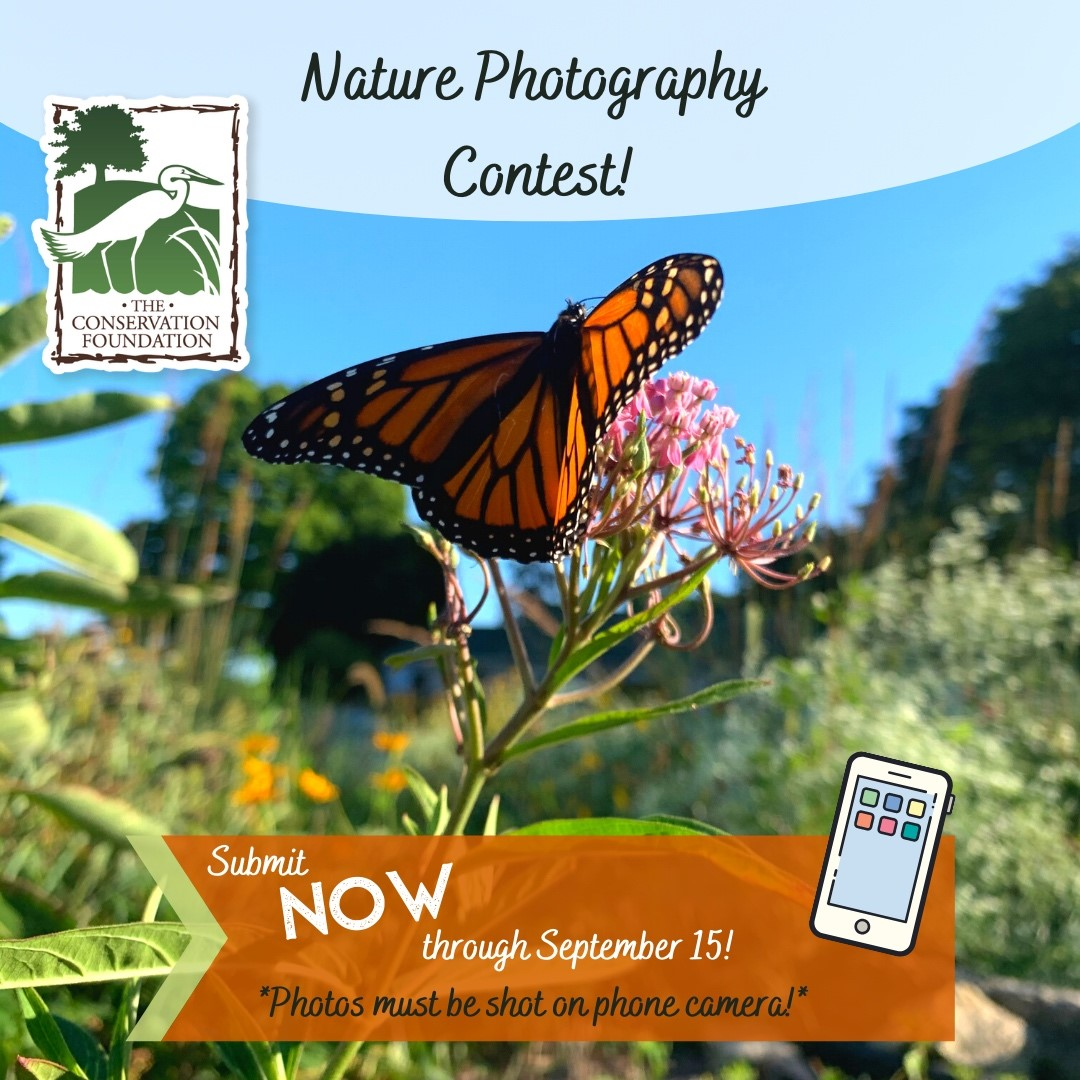 Nature Phone Photography Contest