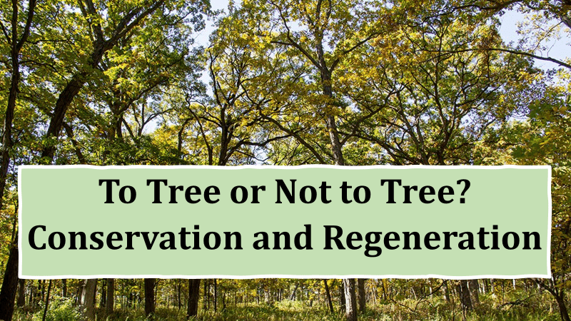 To Tree Or Not To Tree?  Conservation and Regeneration