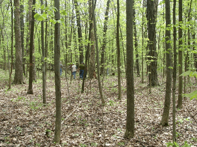 Reservation Woods