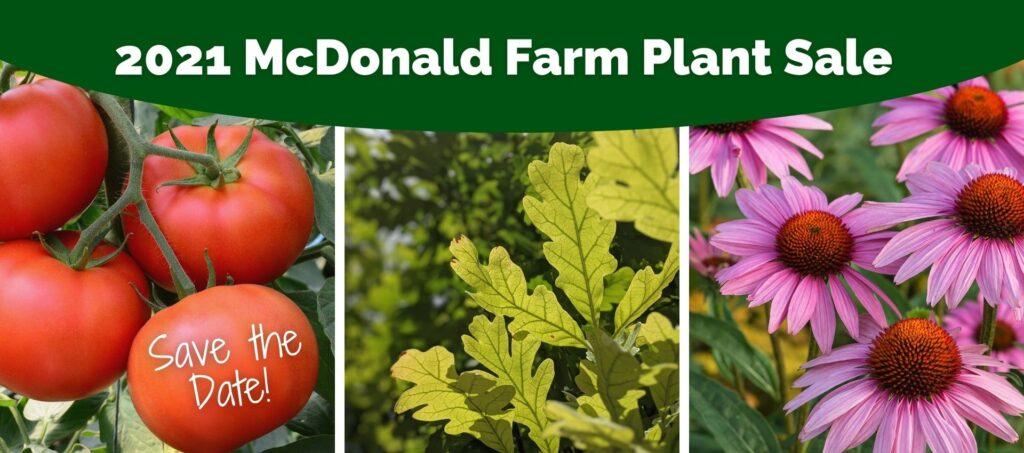 Plant Sale Header