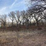 Babbling Brook:  A Visit to Amboy Marsh Nature Preserve