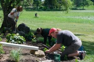 volunteers gardening picture