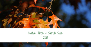Native Tree & Shrub Sale 2021 banner